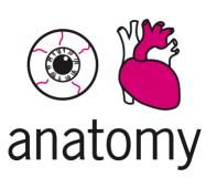 eye heart anatomy