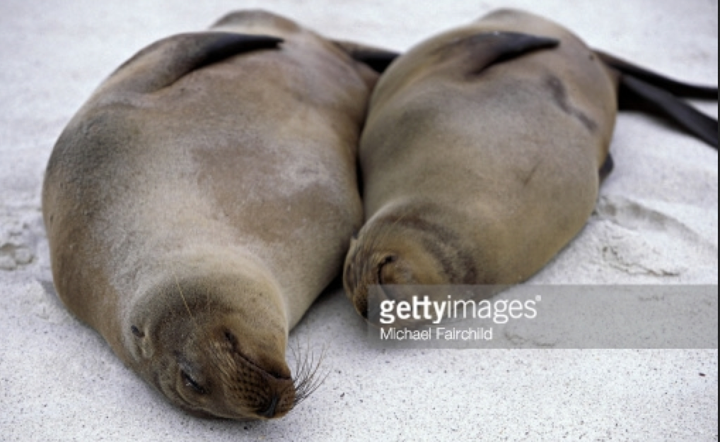 sleeping animals_kinected
