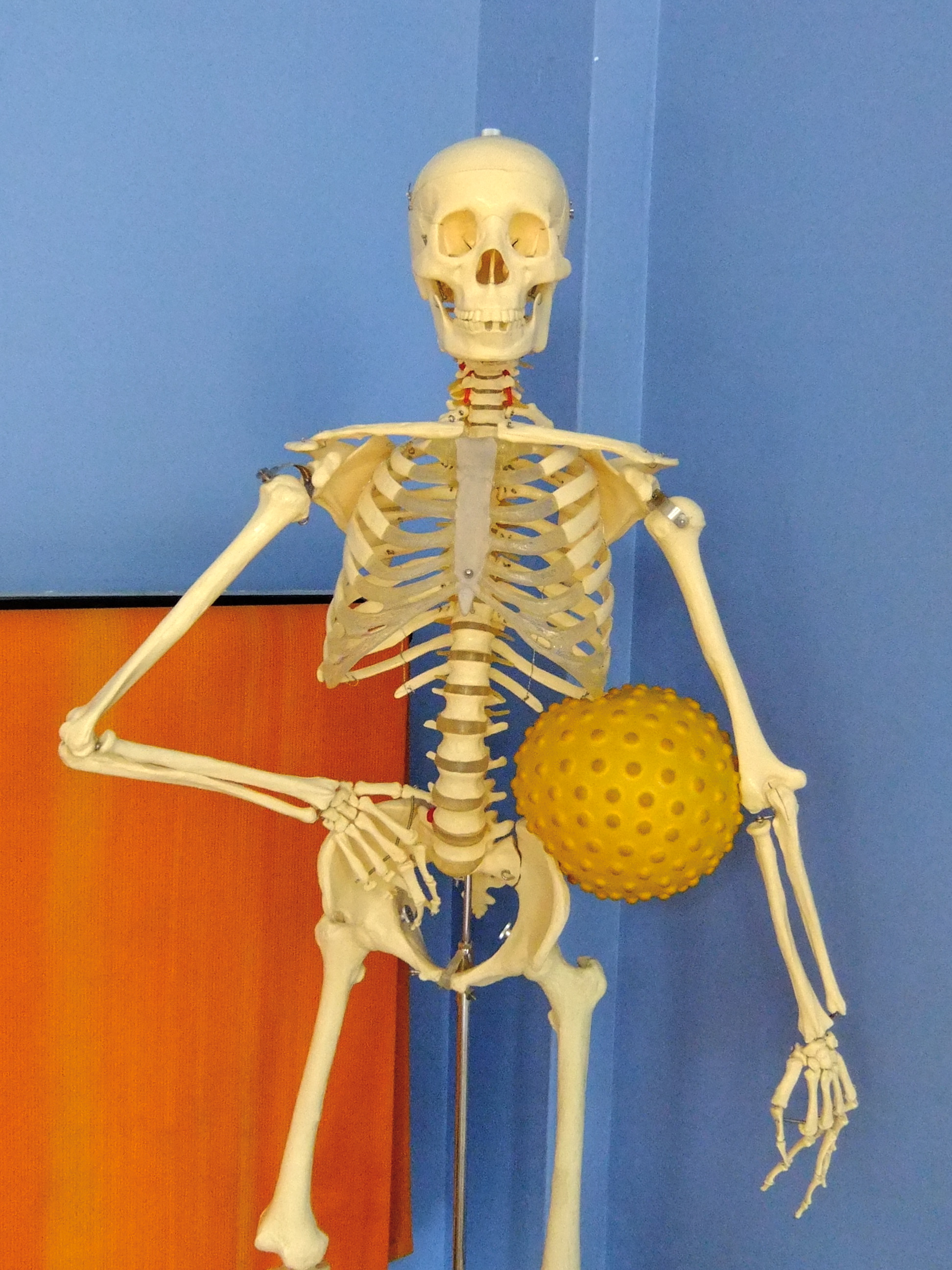 Skeleton_BumpyBall_round_kinected